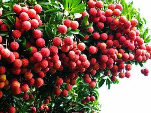 3 cách chữa hôi miệng tận gốc từ rau quả