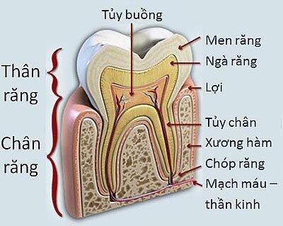 Viêm quanh chân răng có biến chứng không ?