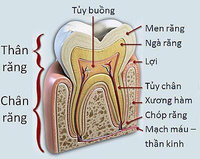 Những băn khoăn thường gặp trong chữa tủy răng