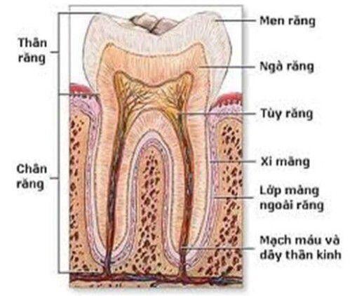 Răng bị chết tủy phải làm gì ?